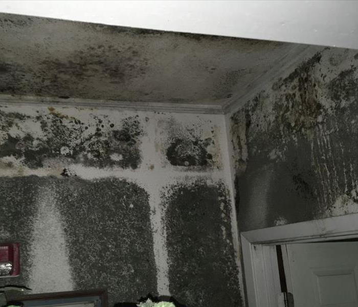 Sever Mold Damaged House