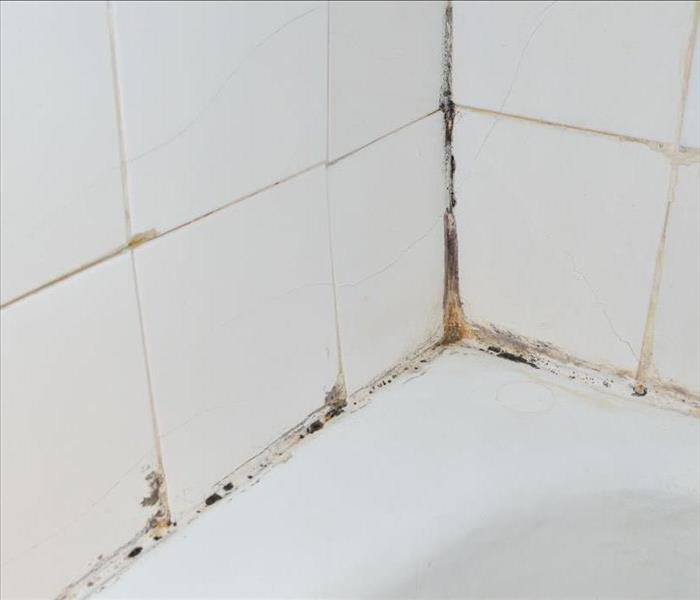 Black mold growing on shower grouted joints tile and appear on the ceramic wall in bathroom