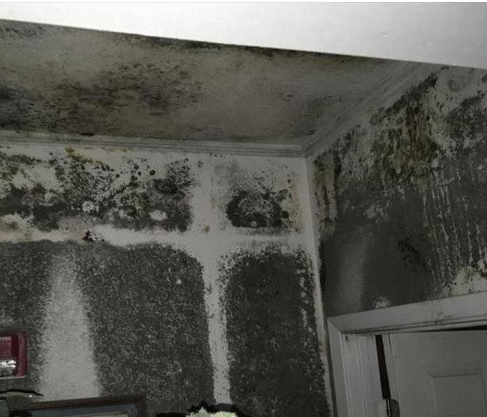 Mold Remediation Understanding Insurance and Mold Coverage