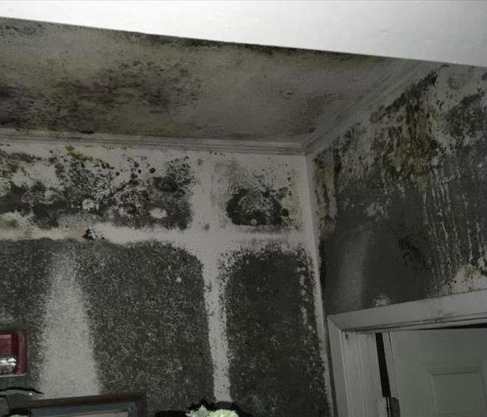 Severe black mold damage in a home